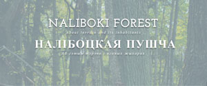 Naliboki Forest blog